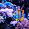 aquarium eau